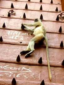 Hanging around in India